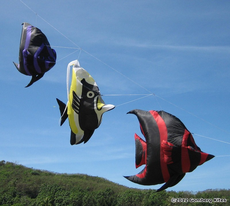 Fishes on the kite line